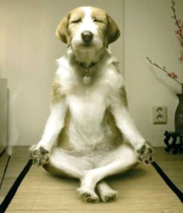 a-weird-dog-yoga[1]