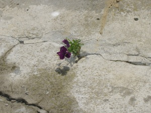 fiorire[1]