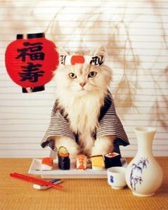 japanese-cat[1]