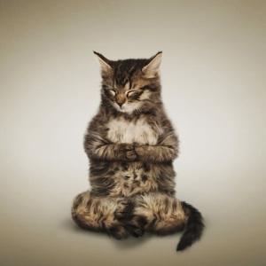 Yoga-Cats-Zen1[1]