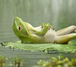 zenfrog[1]