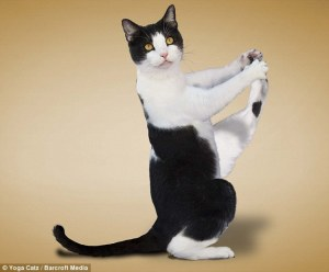 1281330848_cat_yoga-big-1[1]