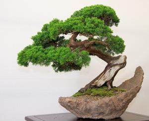 bonsai[1]