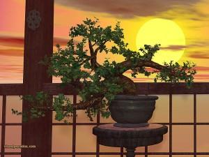 bonsai800[1]