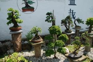 bonsaigarden[1]