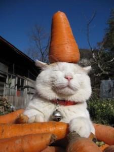 carrots-cat[1]