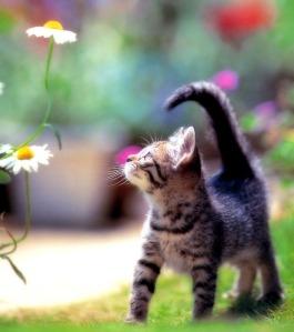 Cat_Pictures_9[1]