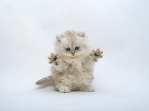cute_ninja_kitten_wallpaper_1024x768[1]