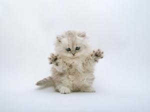 cute_ninja_kitten_wallpaper_1024x768[1]