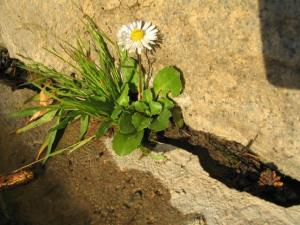 flower_growing_through_cement.preview[1]