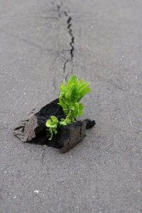 Flowers-growing-out-of-the-concrete-photography24[1]