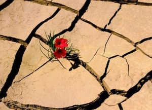 Flowers-growing-out-of-the-concrete-photography25[1]