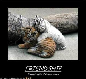 funnypicturesfriendshipknowsnocolors[1]