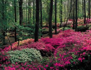 gardens[1]