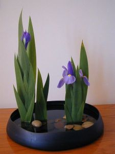 ikebana-exotic-irises-from-google-images[1]