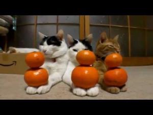 img_5452_buddha-cat[1]