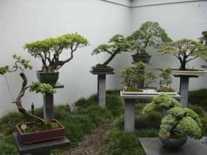 japanese-bonsai-garden[1]