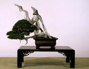 Japanese-bonsai-tree[1]