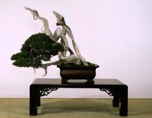 Japanese-bonsai-tree[1]