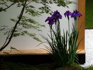 japanese-house-garden[1]