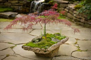 Japanese-Maple-Moss-Rocks[1]