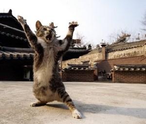 Ninja Kitten[1]