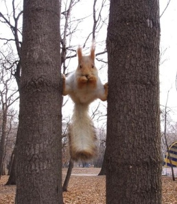 ninja_squirrel[1]