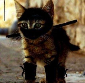 ninjacat4[1]
