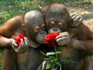 smell-roses[1]