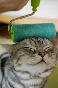 This-cat-knows-the-only-way-to-paint-stucco-is-with-a-brush-and-roller...though-there-are-many-other-useful-inventions-of-the-roller....[1]