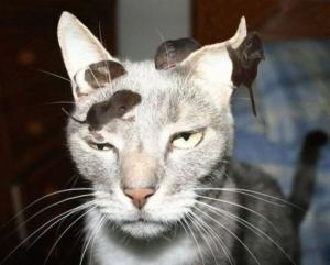 zen cat[1]