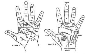 palm2-1[1]