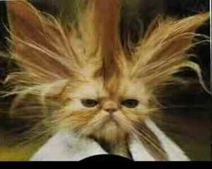bad-cat-hair-day[1]