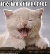 cat dao laughter