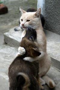 cat pup hug