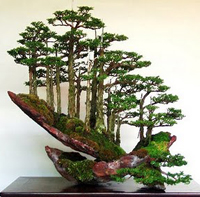 chinese-bonsai2