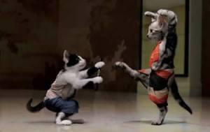 110521-cats-ninja-cats[1]