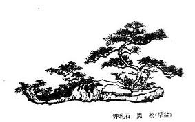 black and white chinese tree