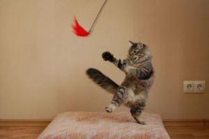 karate-cat[1]