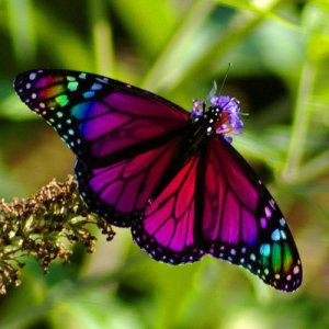 Beautiful Butterflies by cool wallpapers at cool wallpapers and cool and beautiful wallpapers (5)