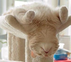 meditating-cat-5-f30[1]