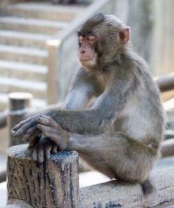 Zen_Monkey[1]