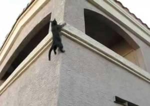 ninja-cat-05[1]