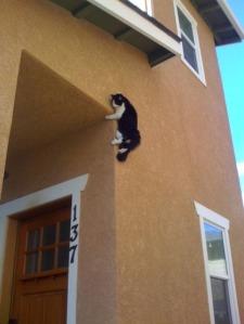 ninja-cat[3]