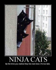 ninja-cats-02[1]