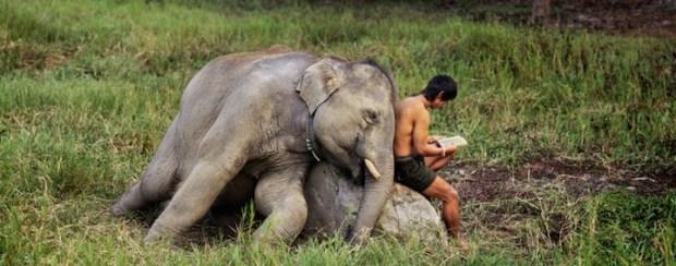 elephant-consciousness-2
